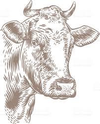 Dessin De T Te De Vache Stock Vecteur Libres De Droits 508223854