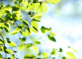 Why isn't my tree leafing? - TreesCharlotte