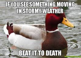 If you see something moving in stormy weather beat it to death ... via Relatably.com