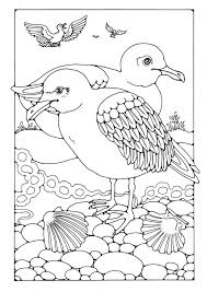 Small Picture Avocet Animal Coloring Pages Colouring nebulosabarcom