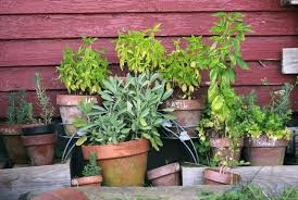 how to grow a herb garden. Herbs Garden \u2013 Tips For Growing How To Grow A Herb
