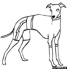 Small Picture Whippet Animal Coloring Pages Dog Coloring Pages Greyhound