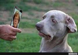 Hund Kriegt Schock Lustige Bilder Sprüche Witze Echt Lustig