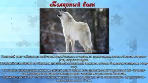 Презентация для дошкольников животные севера картинки и описание  Презентация для дошкольников животные севера картинки и описание животных