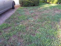 trugreen lawn service review 222200