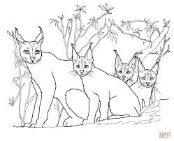 Small Picture Caracal Kittens and Mother coloring page Free Printable Coloring