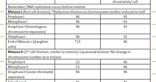 Mitosis Vs Meiosis Chart Biology Exams 4 U Number Of Chromosomes And Chromatids In