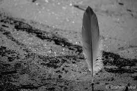 Znalezione obrazy dla zapytania feathers black and white