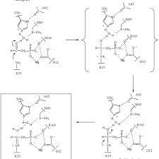 Two possible mechanisms for phosphonatase-catalyzed Schiff-base... |  Download Scientific Diagram