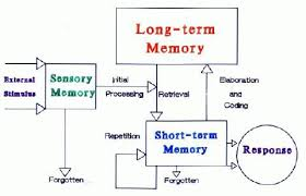 Long Term Memory Chart Educational Psychology Interactive The Information