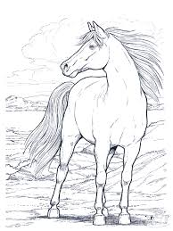 Small Picture Printable Horse Coloring Pages Coloring Coloring Pages