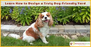 non poisonous plants and flowers for dogs the following tips and ideas can be