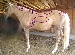 Purina Body Condition Score Chart Henneke Horse Body Condition Scoring System Wikipedia