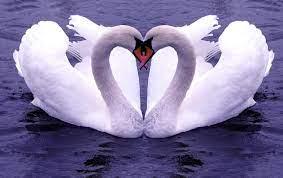 Love Birds Hd 3d Wallpaper - Novocom.top