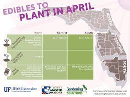 florida vegetable gardening. Gardening Solutions Infographics - University Of Florida, Institute Food And Agricultural Florida Vegetable G