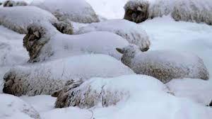 Imagini pentru iarna grea