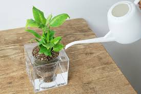 Bosque cube S size Boskke Cube (Bosque cube) and automatic water planters  Patrick Morris