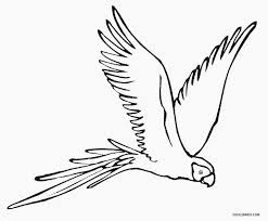 Small Picture 4 Fancy Parrot Coloring Page ngbasiccom