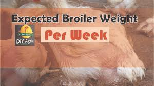 Expected Broiler Weight Per Week And How To Get It Guidefreak