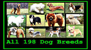 All Dog Breeds Chart All Dog Breeds In The World A To Z
