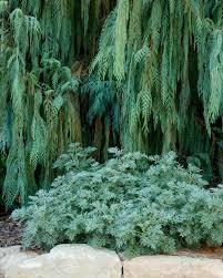 Artemisia Landscape Design Montecito Landscape Montecitoland Twitter