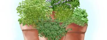 gardening herb garden in containers