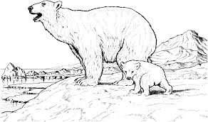 Small Picture Polar Bears Coloring Page With Coloring Pages Draw A Bear Es