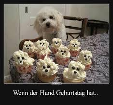 Wenn Der Hund Geburtstag Hat Lustige Bilder Sprüche Witze