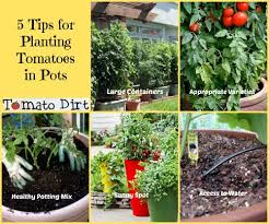 5 Tips For Planting Tomatoes In Pots How To Plan For SuccessContainer Garden Plans Tomatoes
