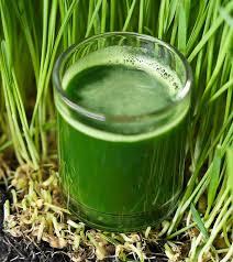 of wheatgr juice for skin hair