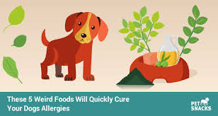 These 5 Weird Foods Will Quickly Cure Your Dogs Allergies › Pet Snacks
