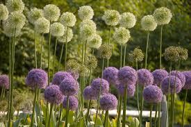 garden flowers. Garden Flowers