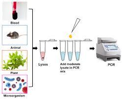 Direct Pcr Kits Creative Biogene