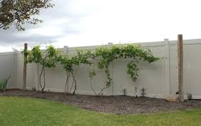 wall trellis ideas grape vine trellis grape vine trellis wall trellis  design ideas