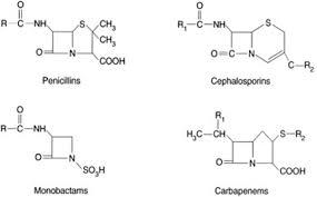 Beta Lactam Antibiotics And Cross Reactivity