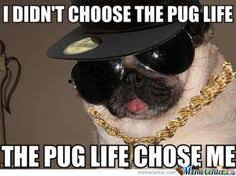 Pug life on Pinterest | Pug Halloween Costumes, Pugs and Funny Pugs via Relatably.com