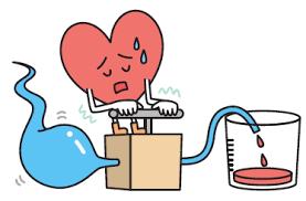 「心臓と解剖生理」の画像検索結果