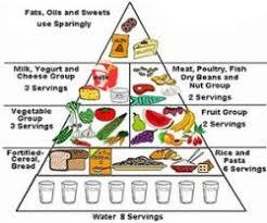 food pyramid essay food essay example memoir essay template persuasive essay gmo s
