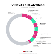Wine Folly Chart The 10 Most Popular Wines In The World Wine Folly