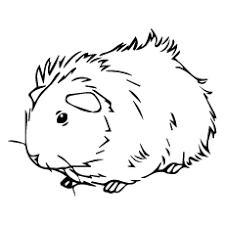 Small Picture Top 25 Free Printable Guinea Pig Coloring Pages Online