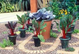 Container Vegetable Gardening Tips  Home Outdoor DecorationContainer Garden Ideas Vegetables