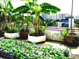 how to make small kitchen garden ideas