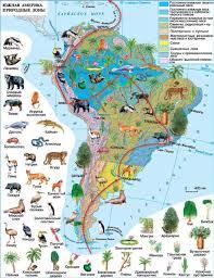Климат Южной Америки География Реферат доклад сообщение  Рис Природные зоны Южной Америки