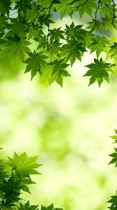 Green Iphone Wallpaper - Greenery ...