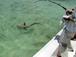 Dream Catcher Fishing Impressive Pip's Shark 32 Picture Of Dream Catcher Charters Key West