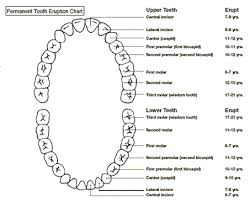 How To Count Teeth Chart American Dental Association Tooth Numbering Chart