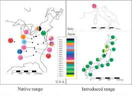 Figure 3 From Origins And Genetic Diversity Of The Ragweed