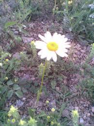 Цветковые растения органы цветковых растений Цветковые растения