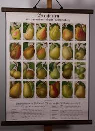Pear Identification Chart Vintage Pull Down Chart Pear Varieties School Chart Lithograph