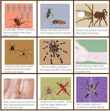 Different Spider Bites Chart Venomous Spiders Injuries Bites Statistics And Comparisons